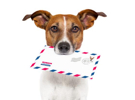 Monopol i političko upravljanje – kako posluje Pošta Srbije?